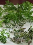 parsley, rosemary, oregano